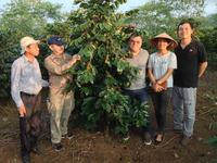 The-Catimor-Coffee-tree-a-local-species-has-been-chosen-to-collect-control-samples-1